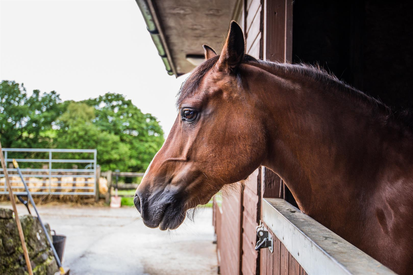 5 bedroom house Sale Agreed in Bolton - pony looking out.jpg.